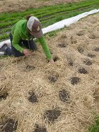farm your yard building new garden