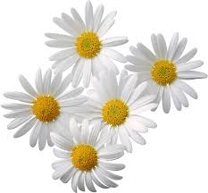 Flowers PNG Transparent Images | PNG All