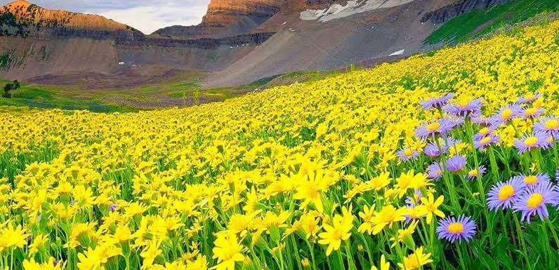 Image result for The Valley of Flowers""