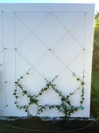 Use Eye Bolts And Wire To Create A Wall Mounted Trellis For Your Climbing Plants Adds Ambiance And Softe Small Garden Design Wall Mounted Trellis Small Garden
