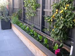 container gardening 5 things you need