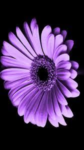 purple flowers iphone wallpaper hd