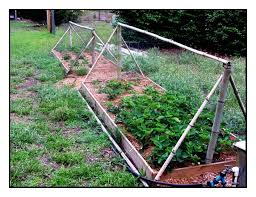 our vegetable garden raised beds