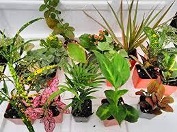terrarium fairy garden plants