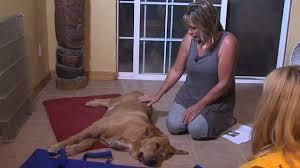 Dog recovering after rattlesnake bite in Jamul