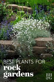 pin on gorgeous garden plants