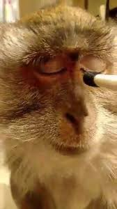 monkey putting on makeup watch or