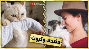 فيديو مضحك للاطفال مع القطط لم يسبق له مثيل الصور Tier3 Xyz