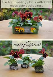 new b q easygrow bedding plants audenza