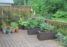 vegetables for containers and up