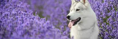 best essential oils for dogs 14