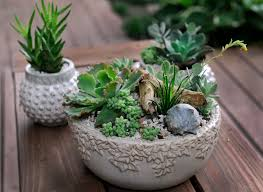 succulents are practically perfect