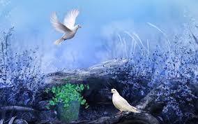صور طيور حلوه