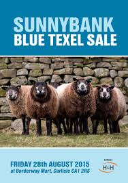 Blue Texel Sheep Sale from the ...