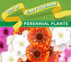 top 10 perennial plants thompson morgan