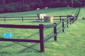 The Definitive Guide To Modern Safe Horse Fencing Think Fencing