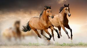 horse wallpapers brown horse wallpaper