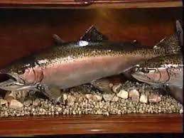 fish replicas fish mounts fiberglass