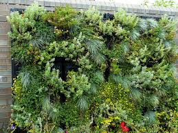 Vertical Gardening Better Homes Gardens