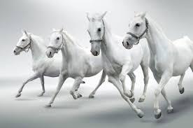 Witte Paarden Foto S Afbeeldingen En Stock Fotografie 123rf