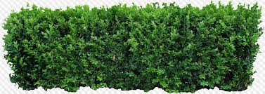 62 Png Nature Creek Field Flowerbed Bushes Round Forest Forest By The River River Bank Bush Bush Fence Pine Pine Branch Grass Tree Christmas Tree Spruce Branch Tree Leaf Spikelets