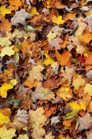 autumn leaves iphone wallpaper hd
