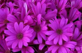 گیاهان با رنگ بنفش (Violet) | مرجع گردشگری | تور آف خورده | آفر تور | تور  ارزان | تور ترکیه | تور ارمنستان | تور گرجستان | تور تایلند | تور باکو |  تور اروپا