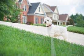 The 5 Best Underground Dog Fences Of 2020 Pet Life Today
