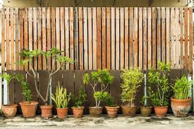 7 Amazing Garden Screening Ideas For Privacy Upgardener