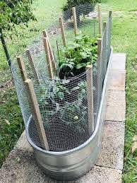 Galvanized Tub Garden In 2020 Chicken Wire Fence Garden Wire Fencing Fence Plants