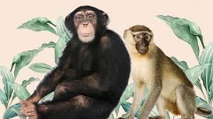 monkeys vs apes roundgl sustain