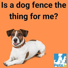 Dog Fences Ireland Is A Dog Fence The Thing For Me Pets Ie