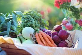 start a vegetable garden business