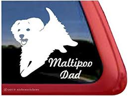 Amazon Com Maltipoo Dad Playful Maltipoo Dog Window Decal Sticker Automotive
