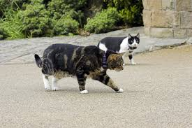 New Uk Study On The Impact Of Hidden Fences On Cats Dogwatch