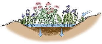 how to build a rain garden gardener s