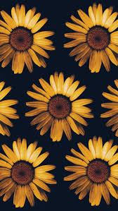 pretty sunflower iphone wallpapers