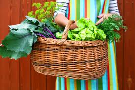 essential tips for vegetable gardening