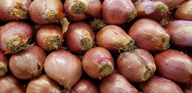 """Image result for onions"""""""