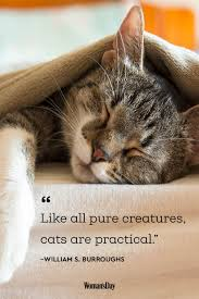 best cat quotes cute cat sayings that describe your cat