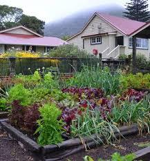gardening build a bed for summer veges