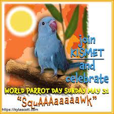 kylascott | I'm a parrot curmudgeon