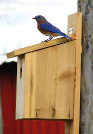 It's time to clean out or add bluebird nest boxes