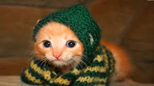 صور قطط مضحكة صور جميلة ومضحكة للقطط كيوت
