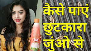 home remes for lice treatment hindi