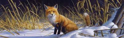 Fox Coyote Rear Window Graphics Back Window Decals