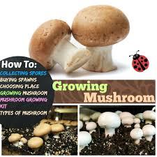 growing mushrooms 4 ses of growing