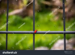 Firefly Which Fence Just Place Rest Backgrounds Textures Stock Image 1419355604