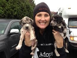 Adopt! – Save-a-Mutt