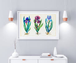 Irises Floral Watercolor Painting Painted Iris Flowers Etsy
